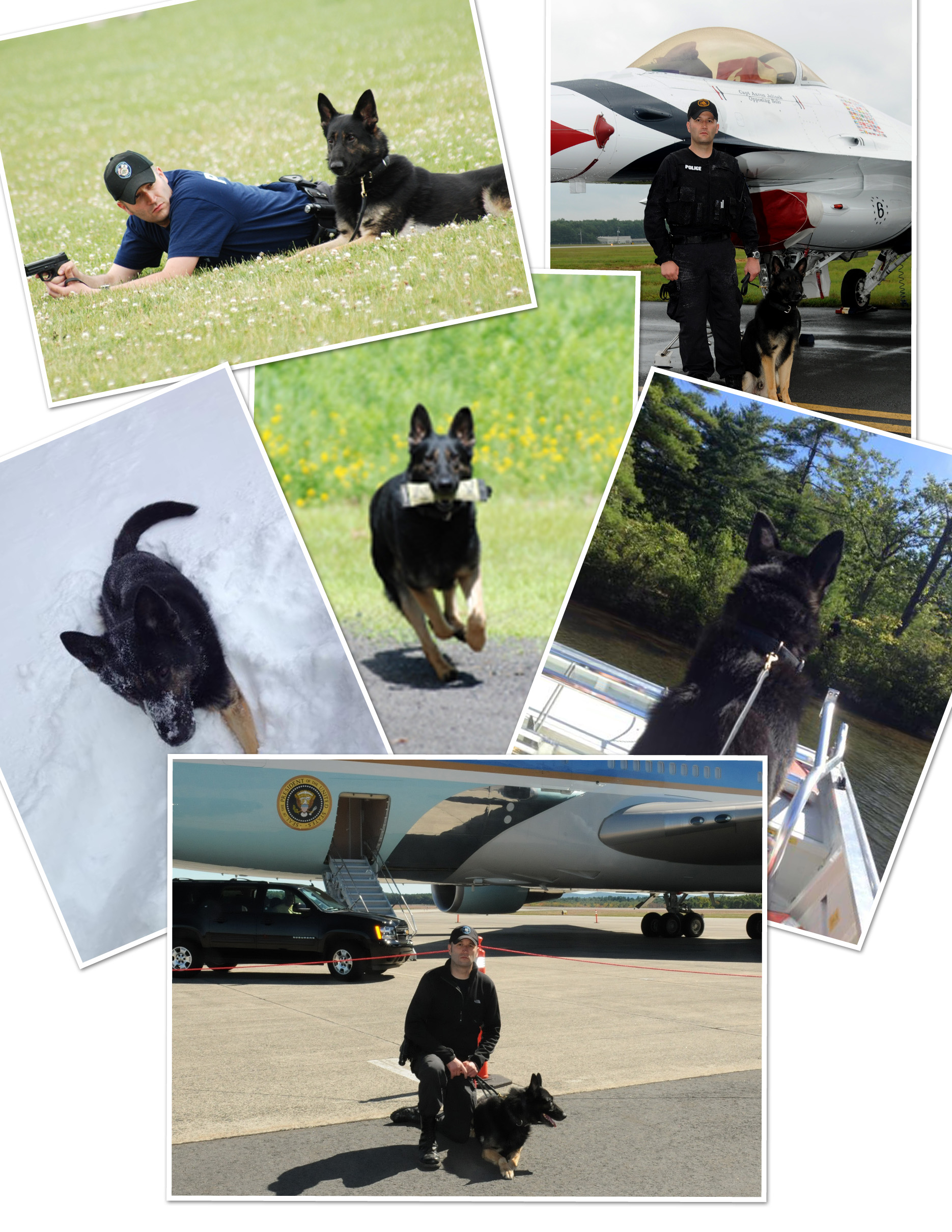 Collage of K-9 Charon